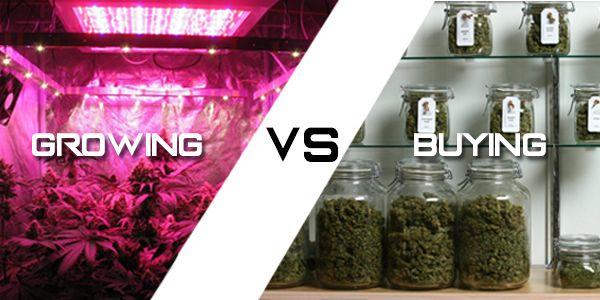 Growing Cannabis vs Buying Cannabis