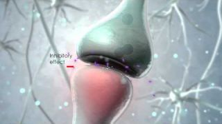 Visualization of the endocannabinoid signaling system